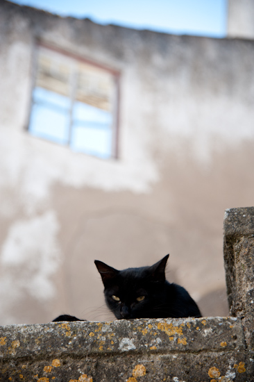Peeking cat, Marvao (Portugal)