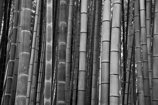 Sagano Bamboo Forest @ Arashiyama, Kyoto (Japan)