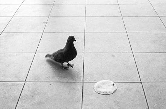 Pigeon tortilla dinner, Valladolid (Mexico)