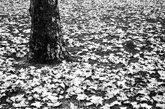 Fallen Leaves @ Berkeley Square, London